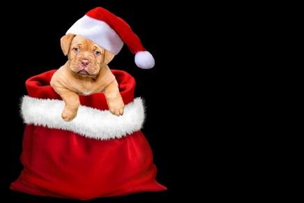 christmas-3001320_1280
