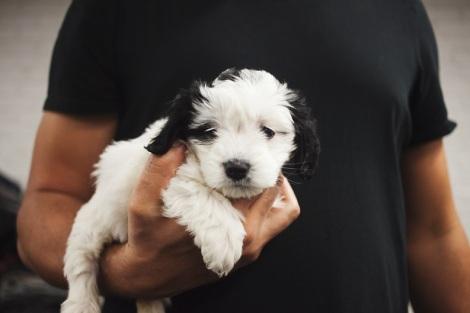 Puppy by-chris-becker-389167